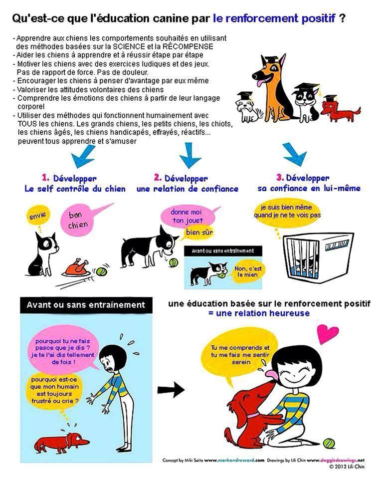 Veille documentaire : éthologie, éducation positive et comportement du chien Educ_p13