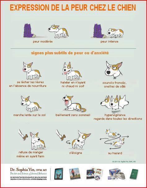 Veille documentaire : éthologie, éducation positive et comportement du chien Expres10