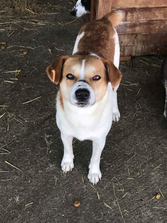 FlapJack - mâle - fourrière de Târgu Frumos - adopté via Andrea Flapja16