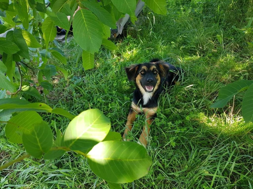 Galina - femelle -en FA à Târgu Frumos - réservée adoption (67)  Galina10