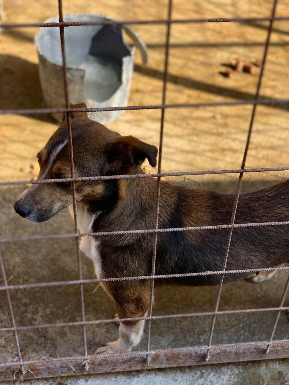 Ginka - femelle - fourrière de Târgu Frumos - sera en famille d'accueil dans le 67 en mai Ginka_20