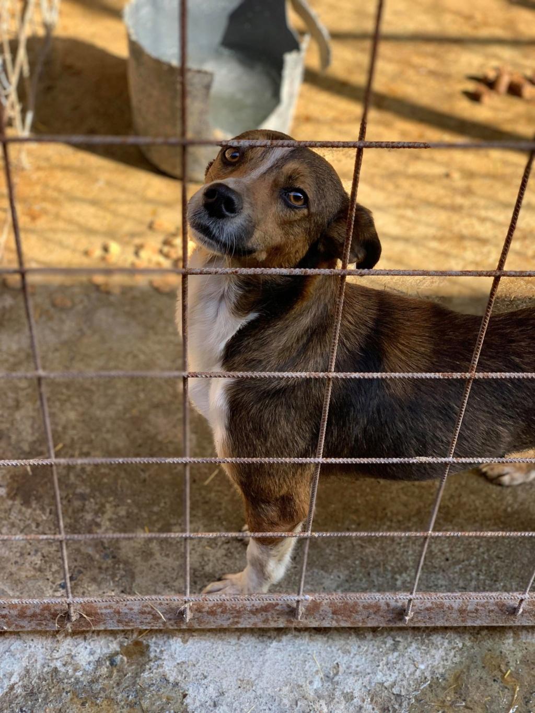 Ginka - femelle - fourrière de Târgu Frumos - sera en famille d'accueil dans le 67 en mai Ginka_21