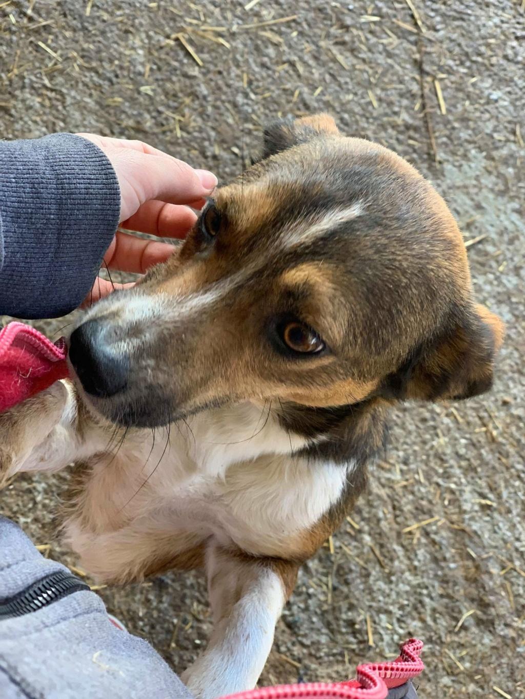 Ginka - femelle - fourrière de Târgu Frumos - sera en famille d'accueil dans le 67 en mai Ginka_22