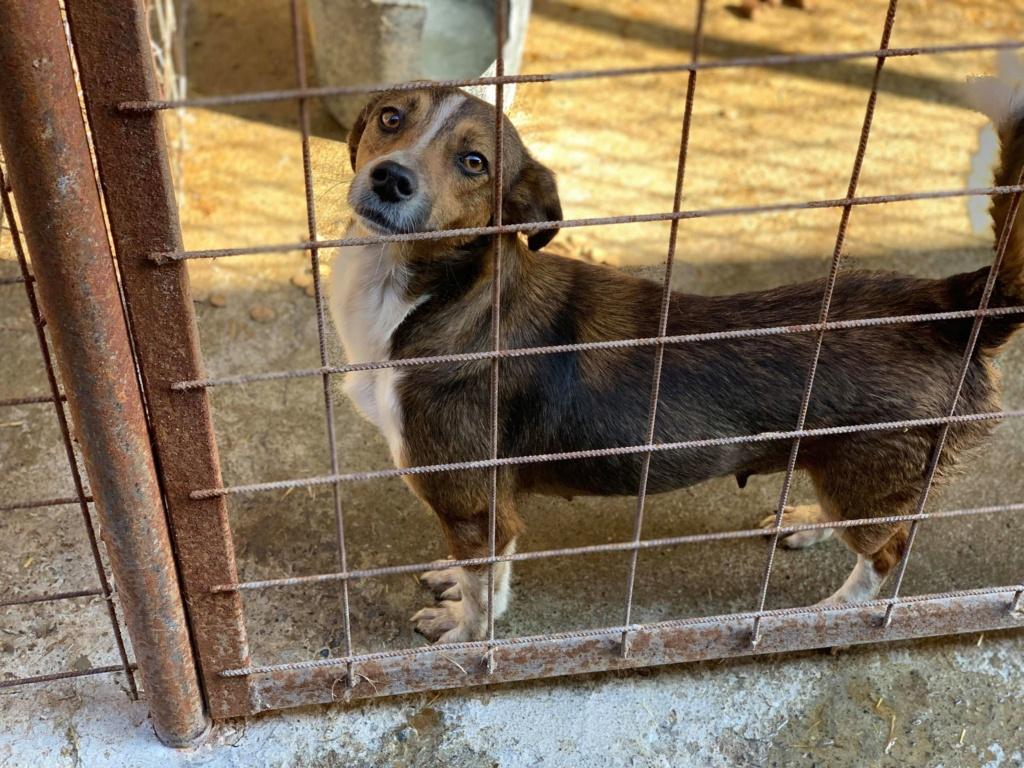 Ginka - femelle - fourrière de Târgu Frumos - sera en famille d'accueil dans le 67 en mai Ginka_23