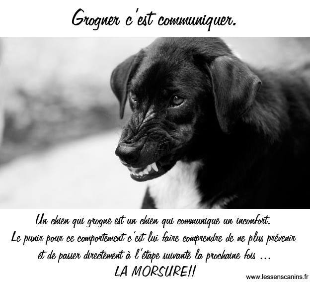 Veille documentaire : éthologie, éducation positive et comportement du chien Grogne10