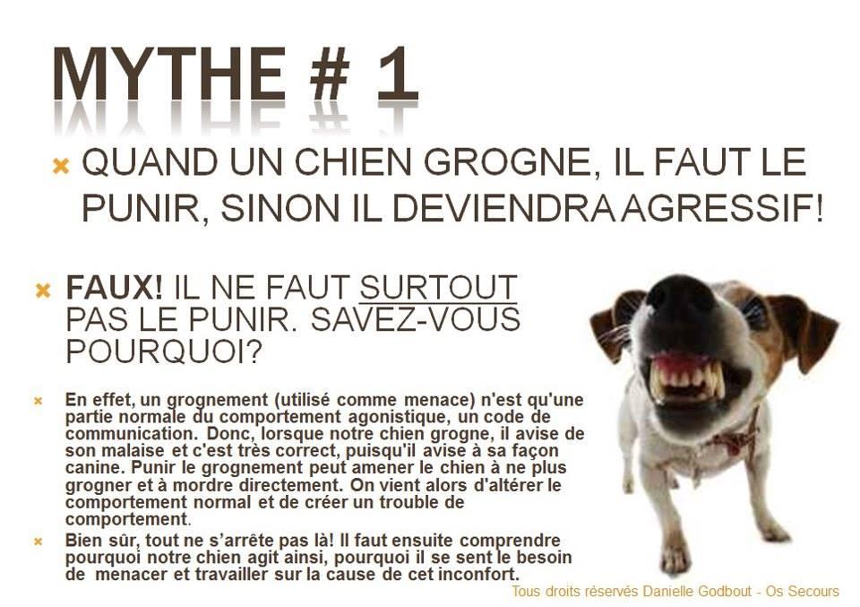 Veille documentaire : éthologie, éducation positive et comportement du chien Grogne12