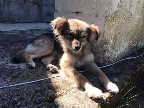 Hinouk - femelle - Târgu Frumos - réservée adoption (57) Hinouk12