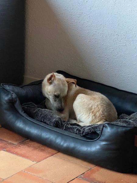 Serenity-  femelle-fourrière de Târgu Frumos -  en famille d'accueil dans le 78  Img_0817