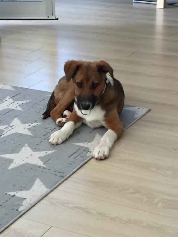 Toby- mâle-refuge de Targu Frûmos - réservé adoption 67 Img_5810