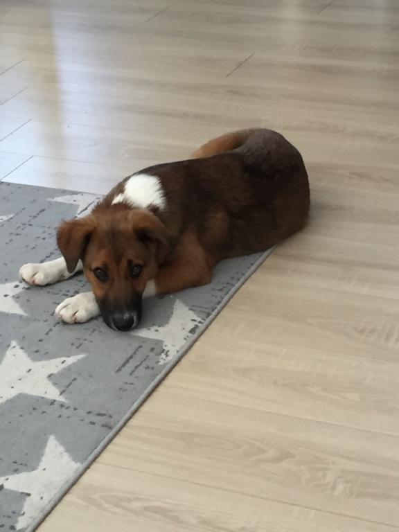 Toby- mâle-refuge de Targu Frûmos - réservé adoption 67 Img_5811