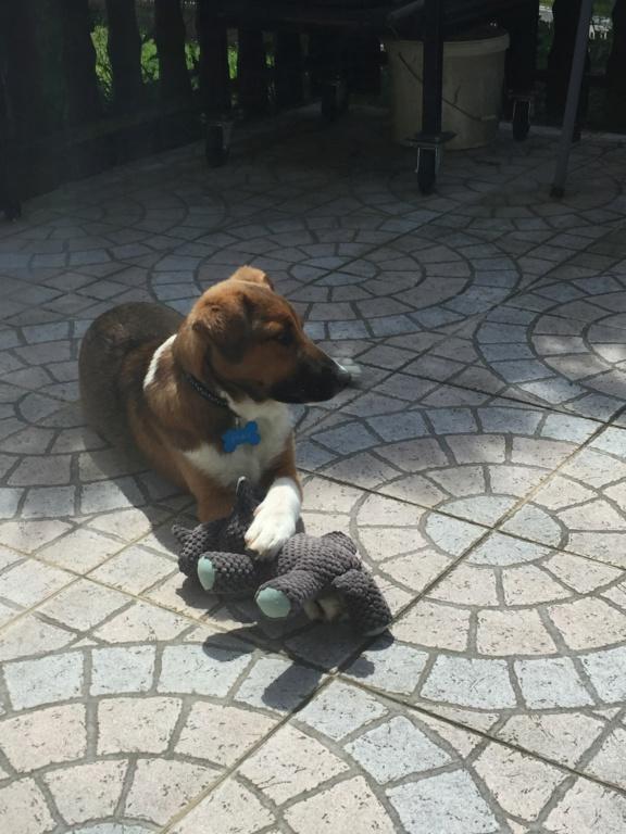 Toby- mâle-refuge de Targu Frûmos - réservé adoption 67 Img_5915