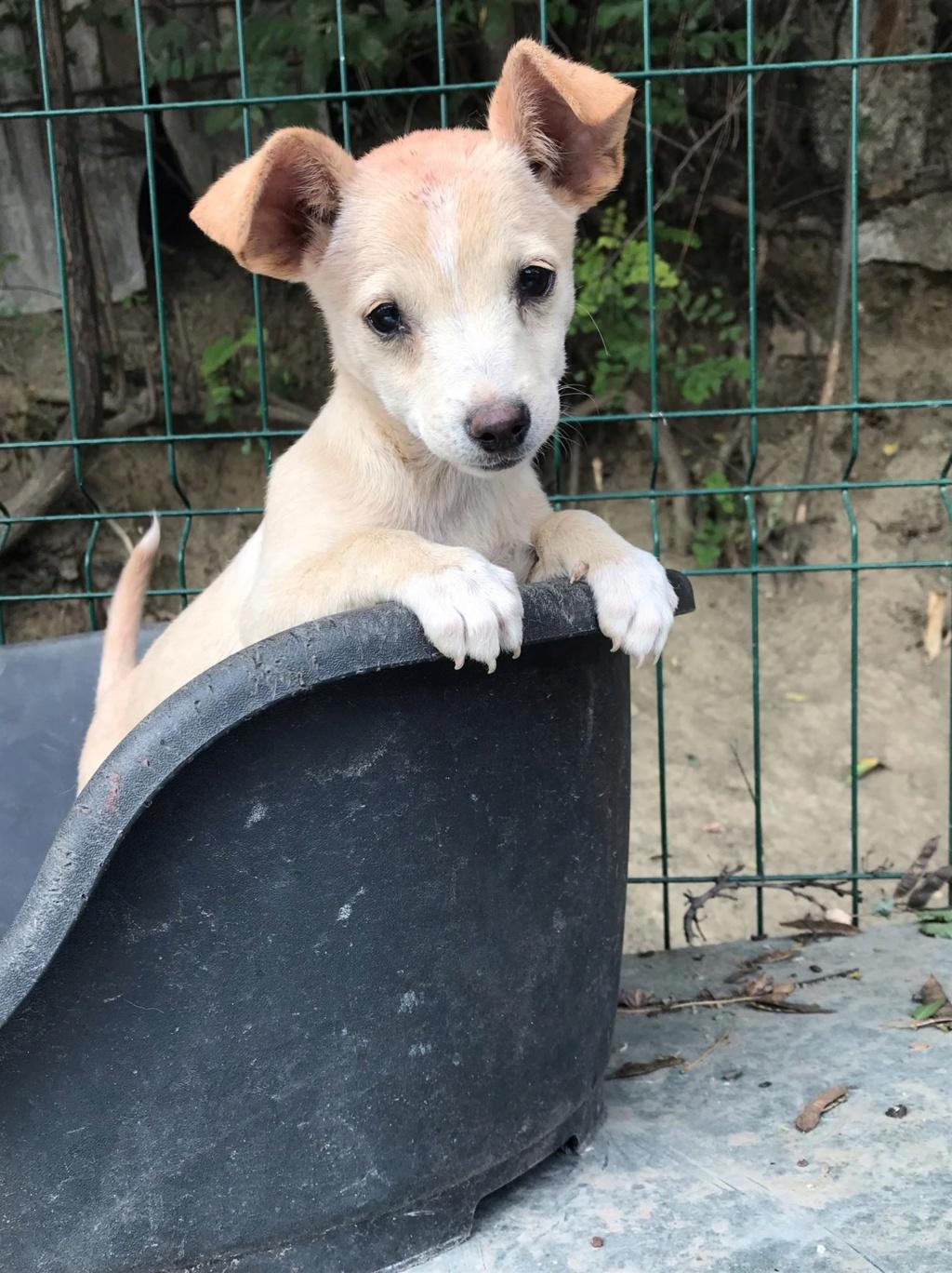 Jazzie - femelle - Târgu Frumos - adoptée via Andreea Jazzie12