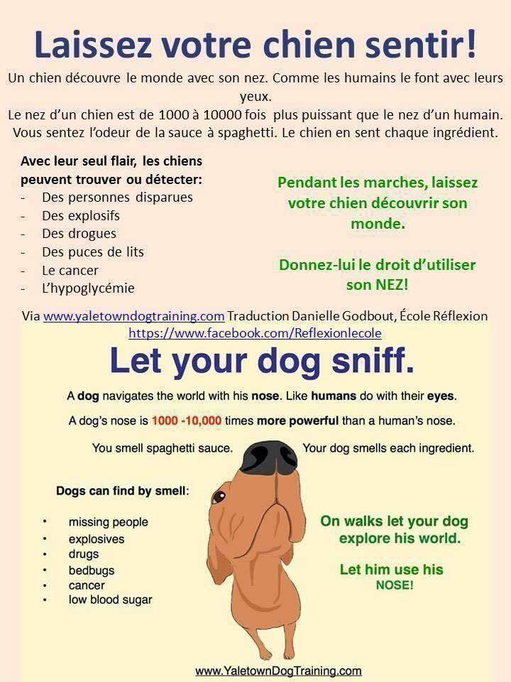 Veille documentaire : éthologie, éducation positive et comportement du chien Laisse10