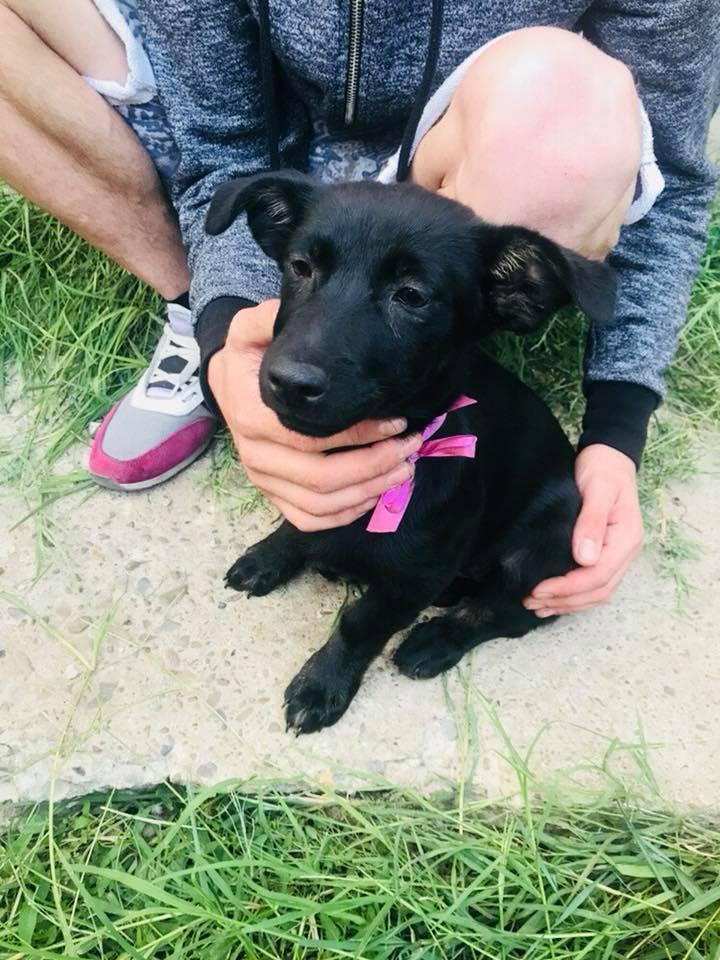 Lena - femelle - Târgu Frumos - réservée adoption (67) Lena_410