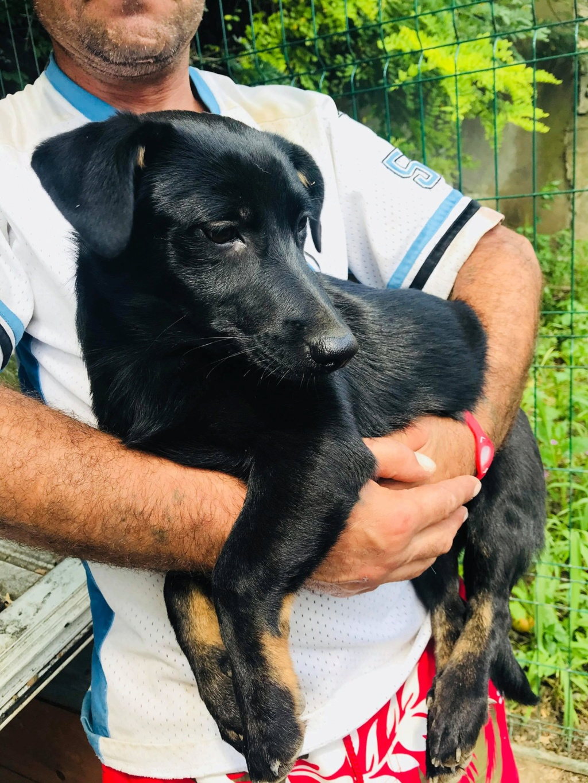 Lena - femelle - Târgu Frumos - réservée adoption (67) Lena_710