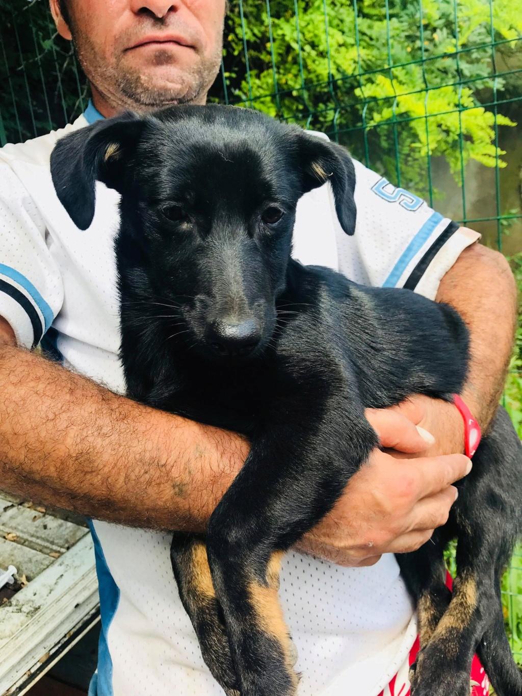 Lena - femelle - Târgu Frumos - réservée adoption (67) Lena_810