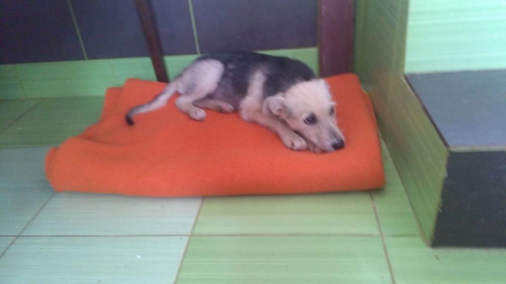 Gioia (ex-Pantoufle) - femelle - adoptée (57) Pantou13
