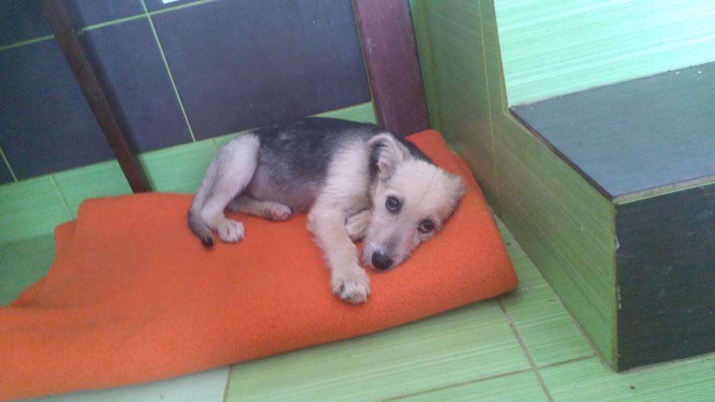 Gioia (ex-Pantoufle) - femelle - adoptée (57) Pantou14