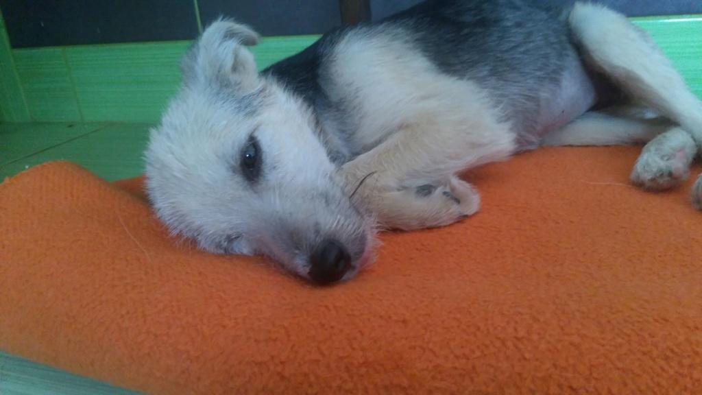 Gioia (ex-Pantoufle) - femelle - adoptée (57) Pantou15