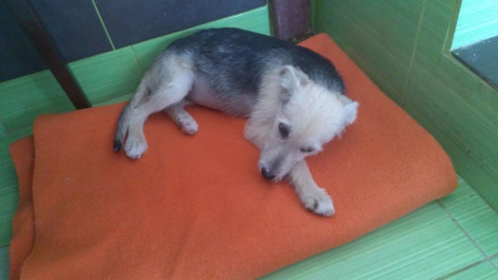 Gioia (ex-Pantoufle) - femelle - adoptée (57) Pantou16