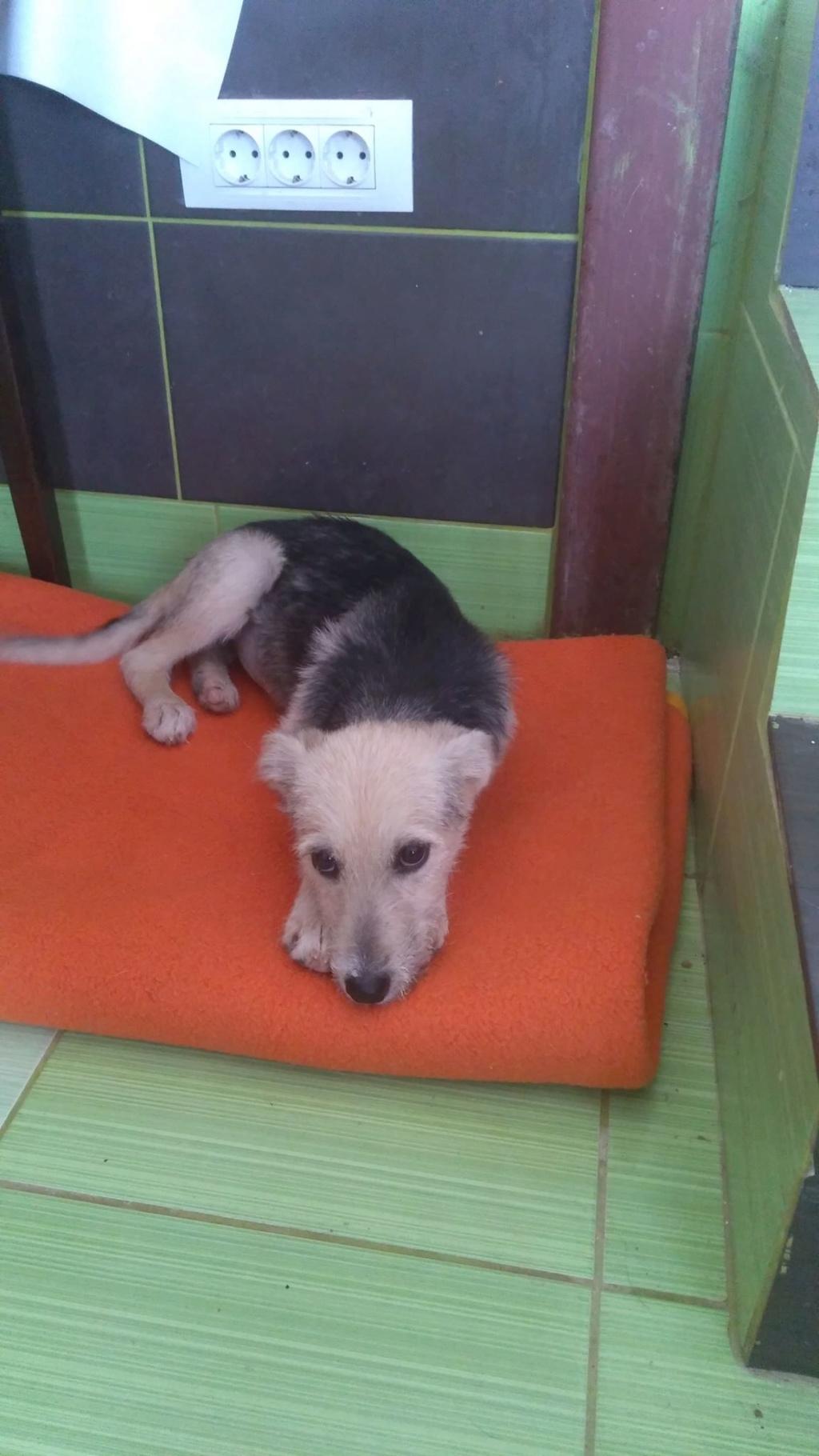 Gioia (ex-Pantoufle) - femelle - adoptée (57) Pantou17