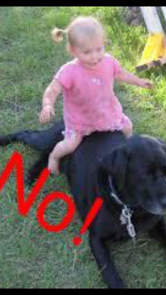 Veille documentaire : éthologie, éducation positive et comportement du chien Pas_un11