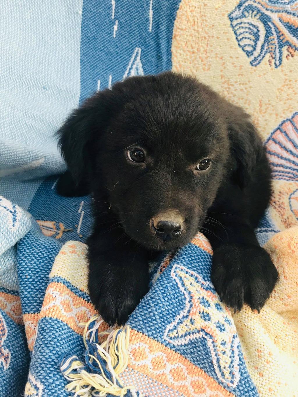 Pixis - mâle - chez Andreea à Târgu Frumos-reservé adoption 68 Pixis_14