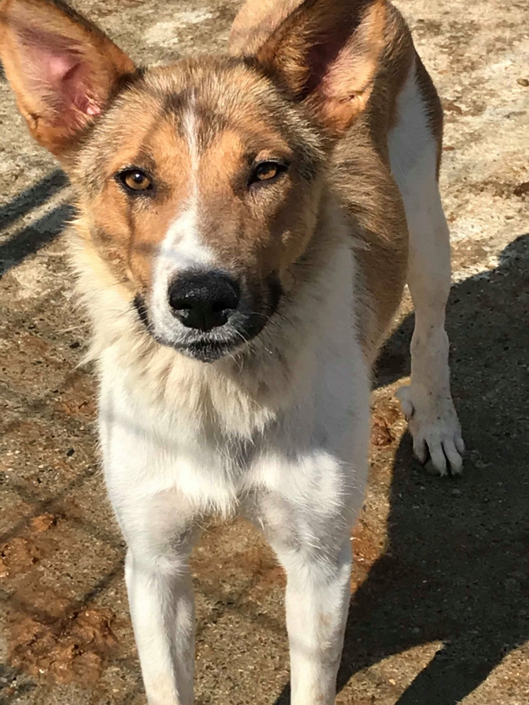 Sabrina - femelle - fourrière de Târgu Frumos Sabrin10