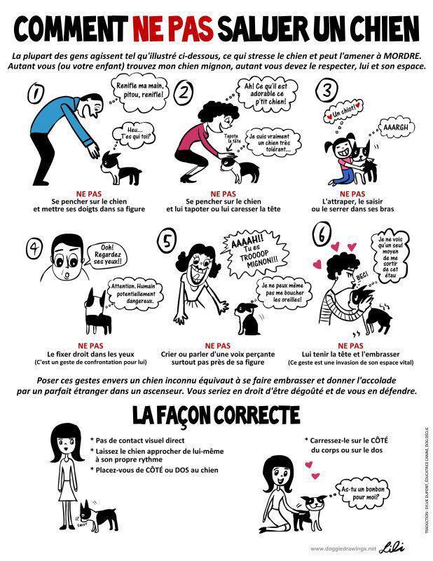 Veille documentaire : éthologie, éducation positive et comportement du chien Saluta10