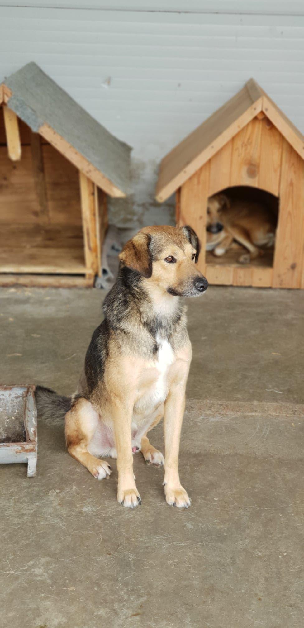 Sfarlic - mâle - fourrière mouroir de Iasi Sfarli11