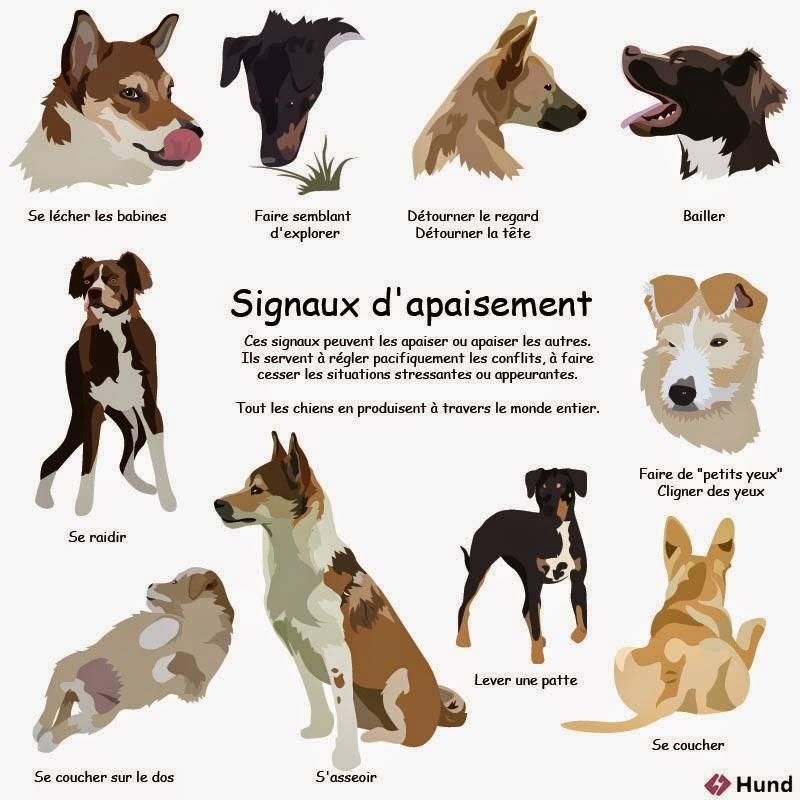 Veille documentaire : éthologie, éducation positive et comportement du chien Signau10