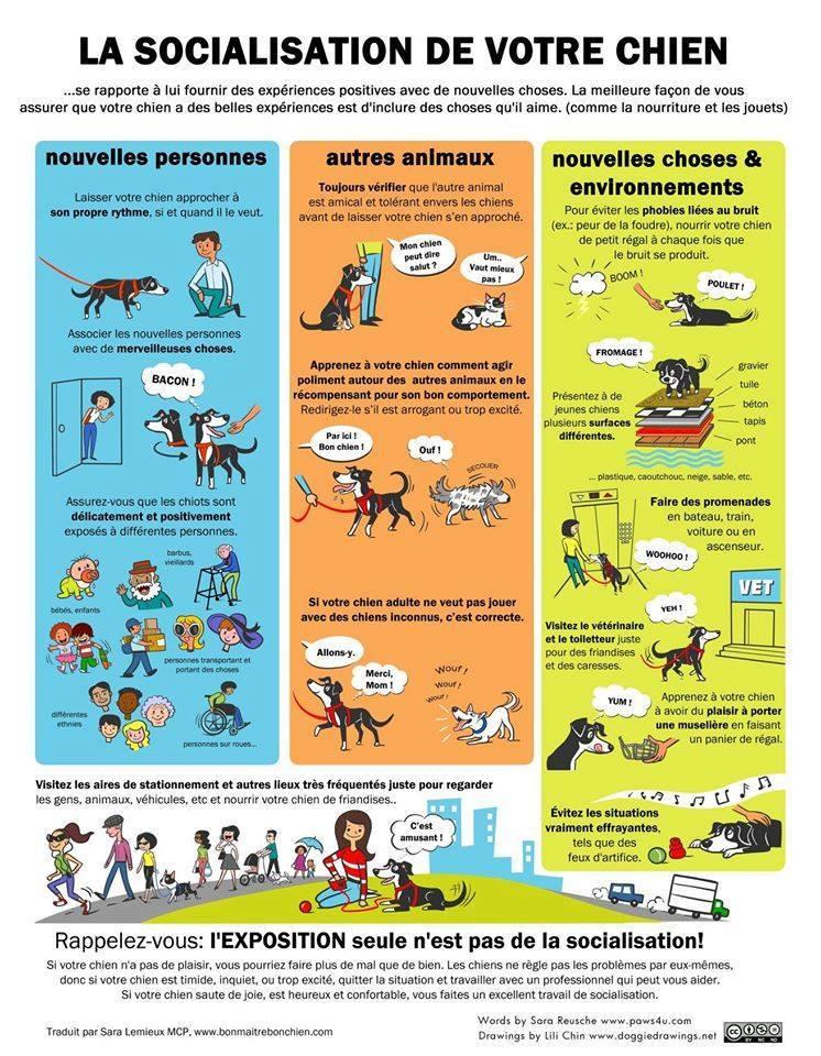 Veille documentaire : éthologie, éducation positive et comportement du chien Sociab10
