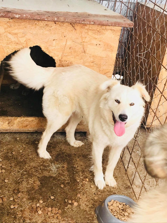 Stella - femelle - fourrière de Târgu Frumos - réservée adoption (68) Stella10