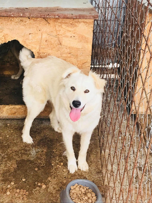 Stella - femelle - fourrière de Târgu Frumos - réservée adoption (68) Stella14