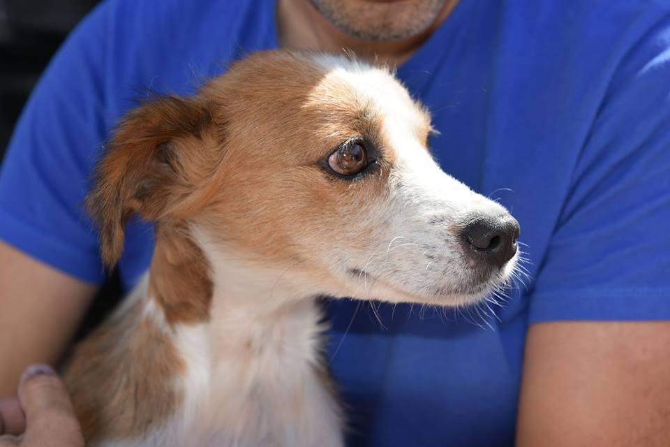 Sury - femelle - chez Rudy (Iasi) - réservée adoption (68) Sury_112