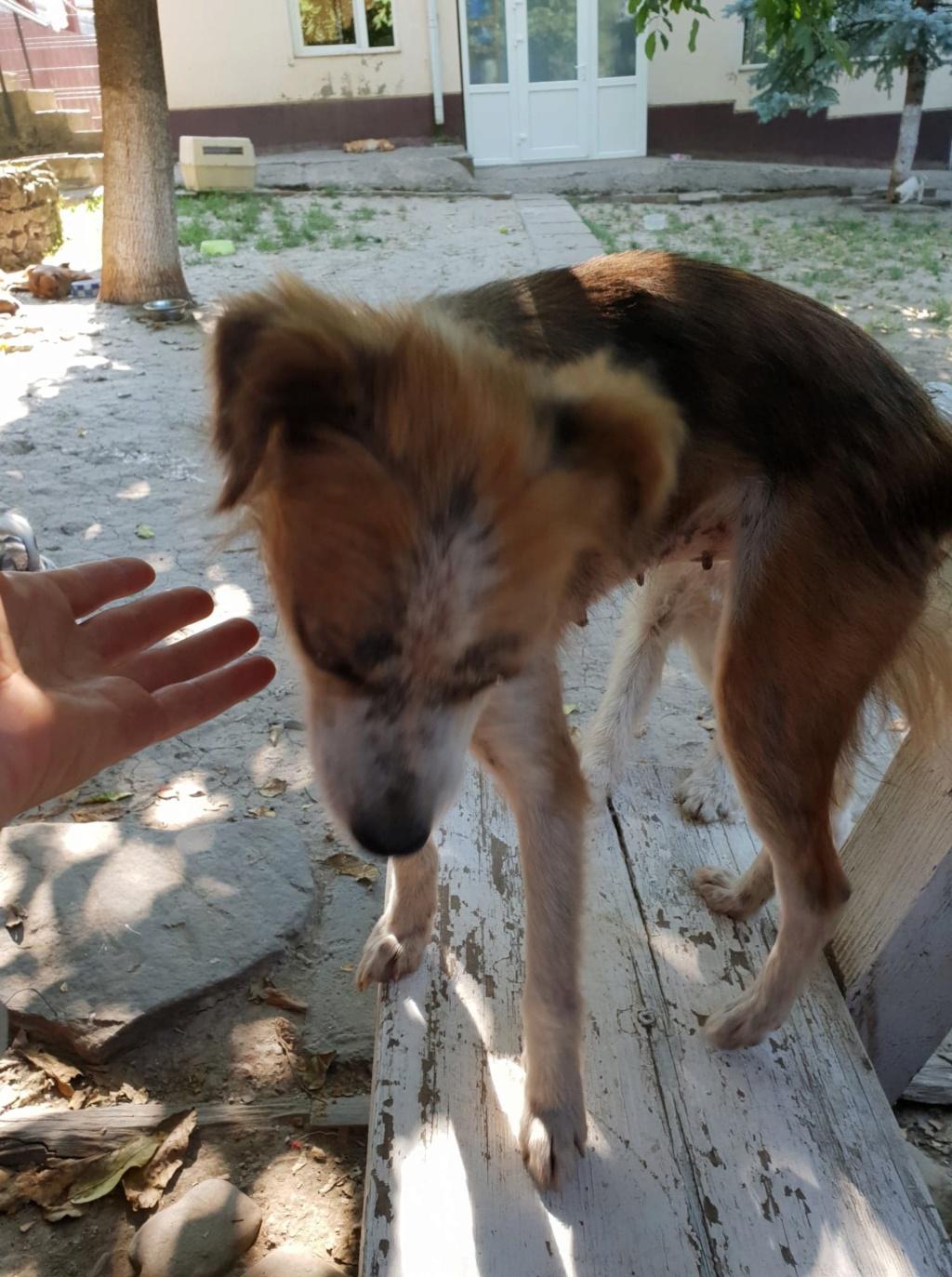Sury - femelle - chez Rudy (Iasi) - réservée adoption (68) Sury_410