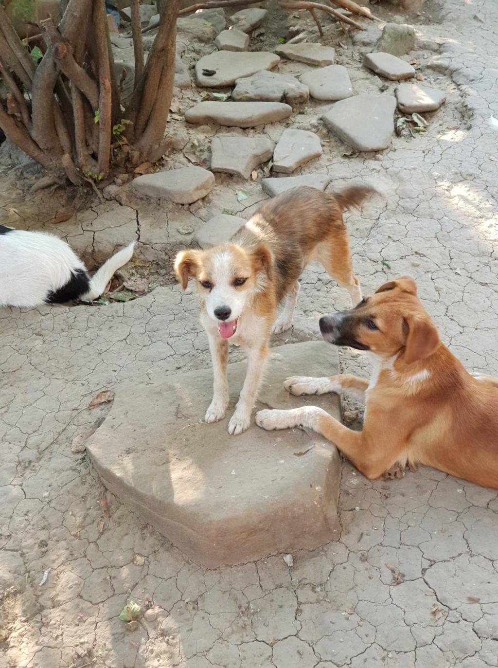 Sury - femelle - chez Rudy (Iasi) - réservée adoption (68) Sury_510