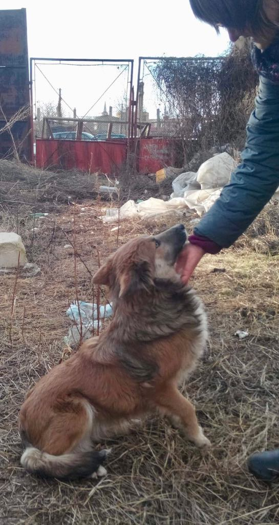 Ohmnia (ex-Zoey) - femelle - refuge d'Arad - réservée adoption (68) Zoey_112