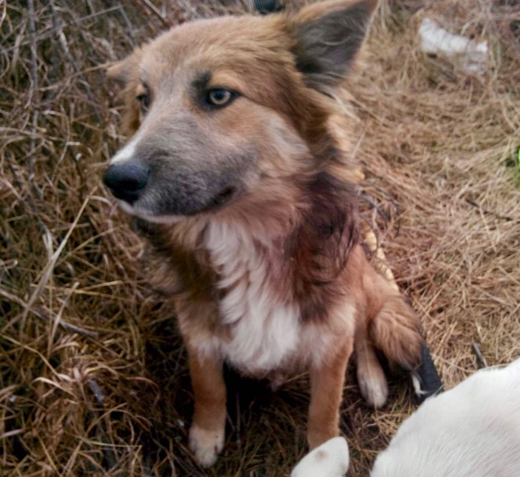 Ohmnia (ex-Zoey) - femelle - refuge d'Arad - réservée adoption (68) Zoey_113