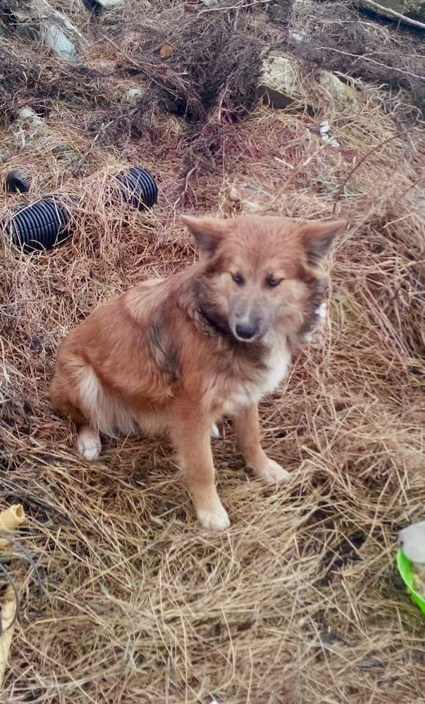 Ohmnia (ex-Zoey) - femelle - refuge d'Arad - réservée adoption (68) Zoey_118