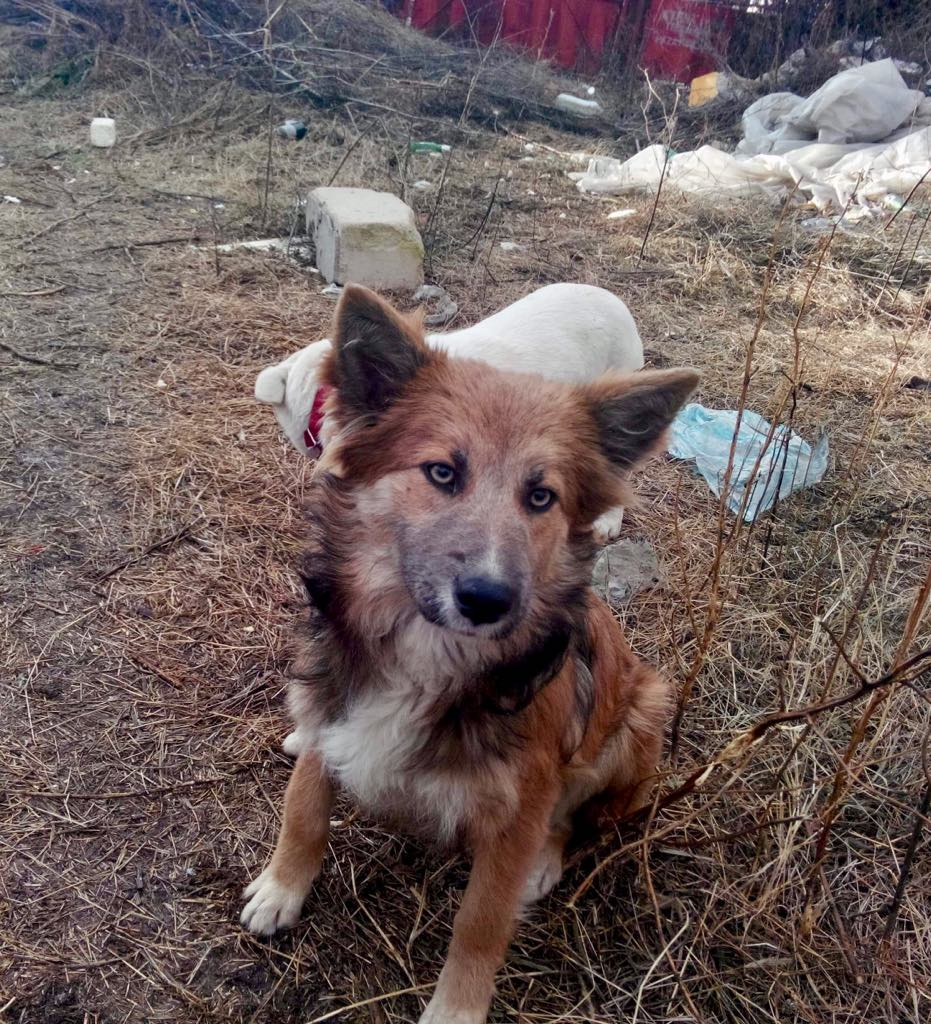 Ohmnia (ex-Zoey) - femelle - refuge d'Arad - réservée adoption (68) Zoey_119