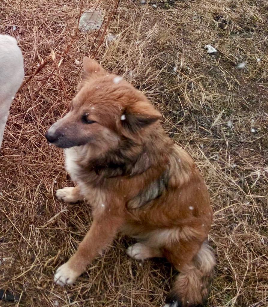 Ohmnia (ex-Zoey) - femelle - refuge d'Arad - réservée adoption (68) Zoey_120