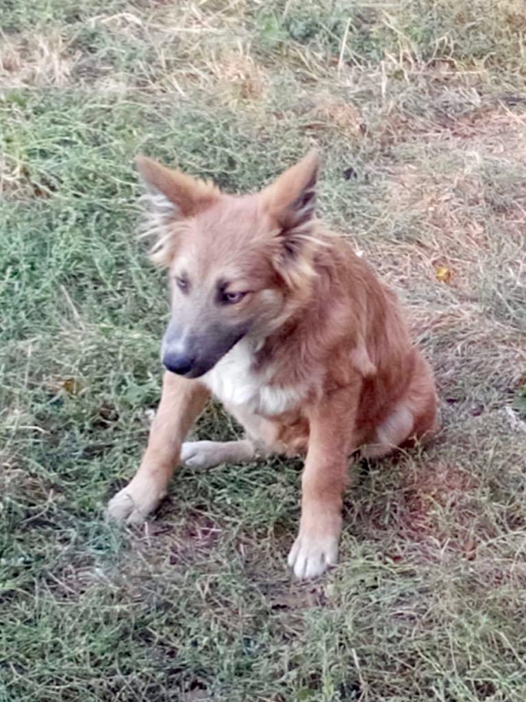 Ohmnia (ex-Zoey) - femelle - refuge d'Arad - réservée adoption (68) Zoey_310