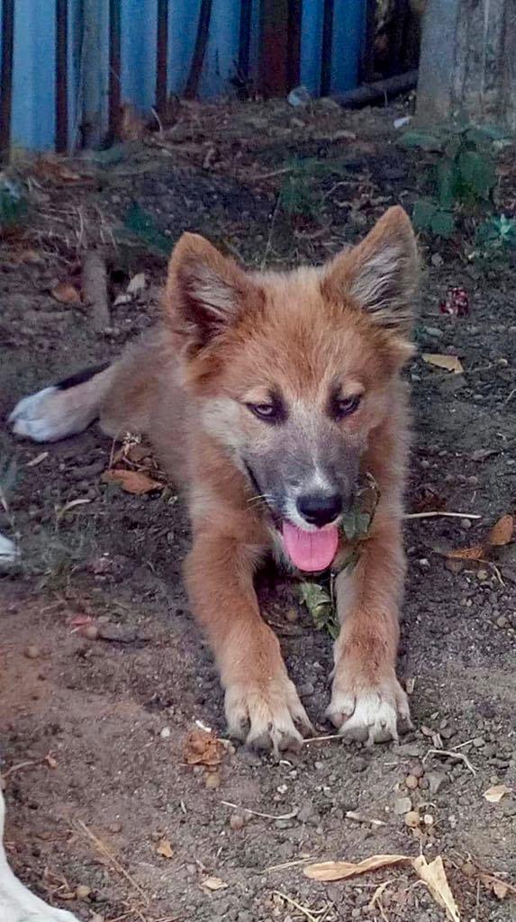 Ohmnia (ex-Zoey) - femelle - refuge d'Arad - réservée adoption (68) Zoey_410