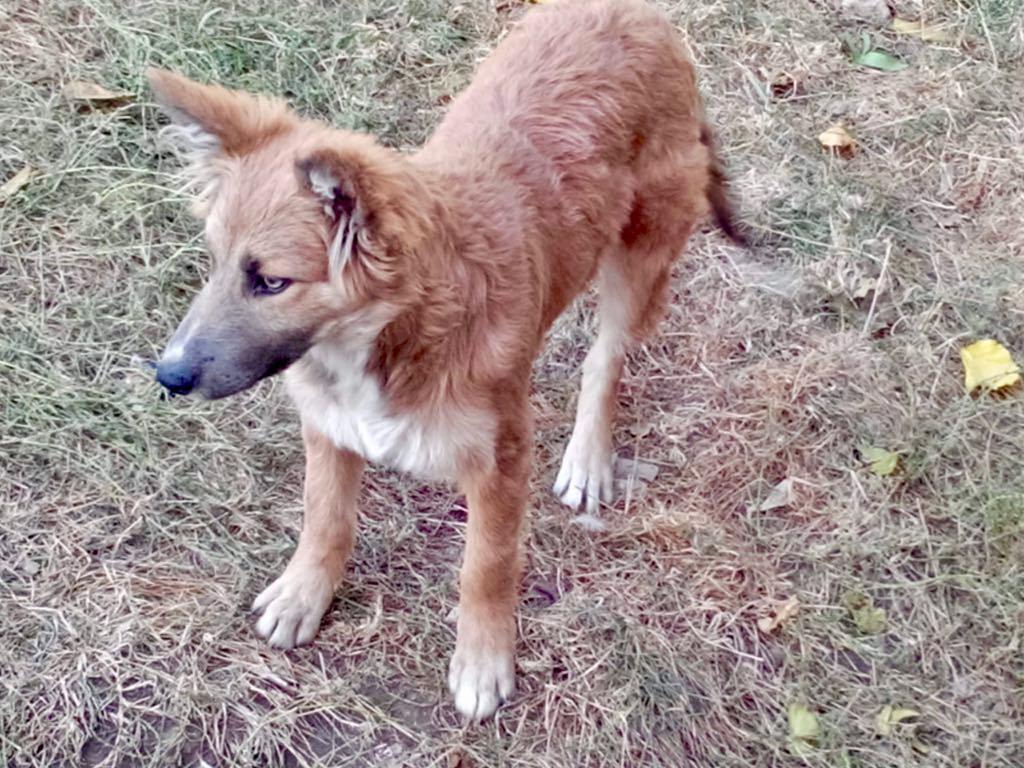 Ohmnia (ex-Zoey) - femelle - refuge d'Arad - réservée adoption (68) Zoey_810