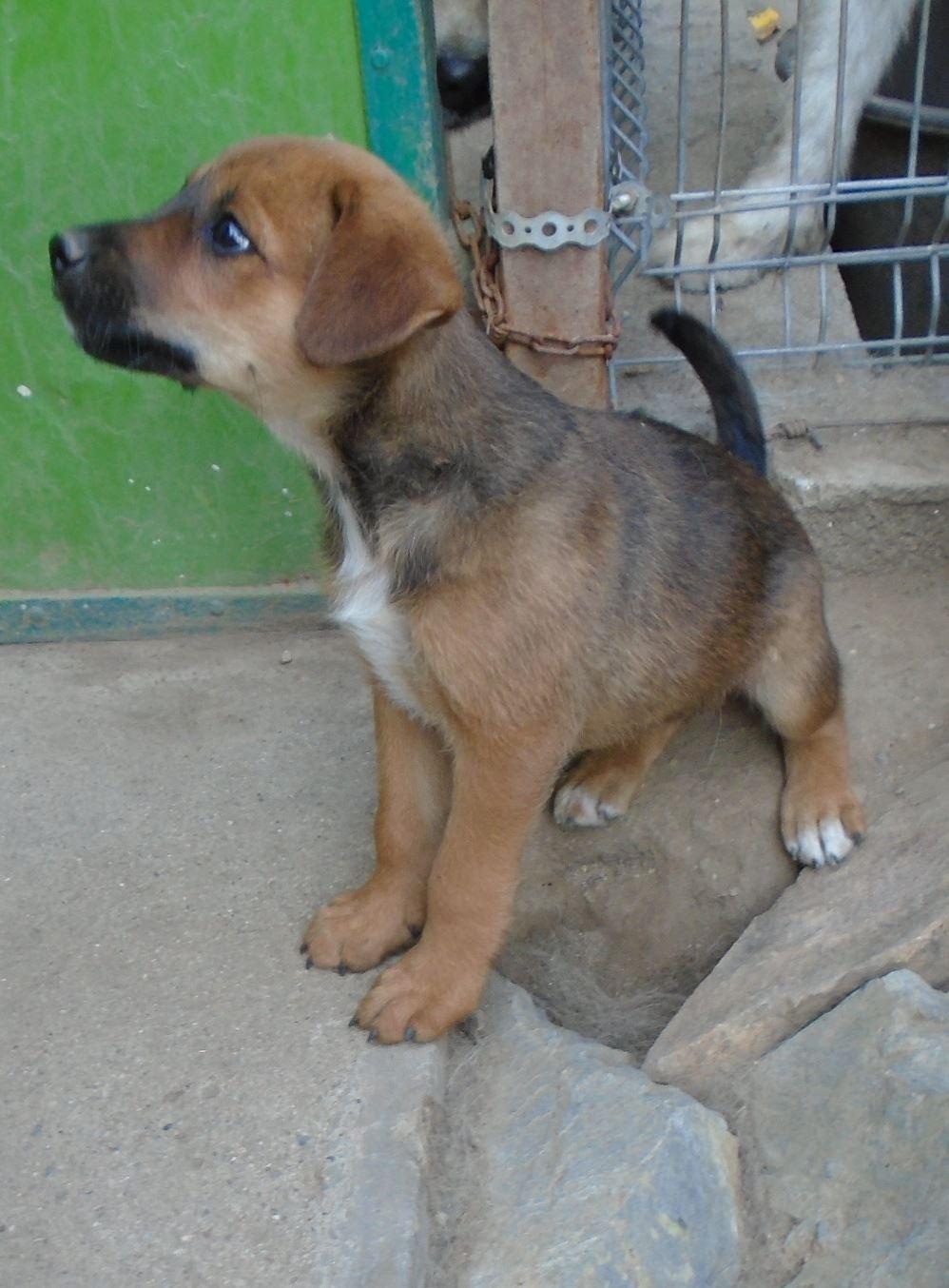 Zora - femelle - refuge de Arad - réservée adoption (67) Zora_110
