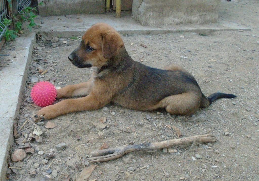 Zora - femelle - refuge de Arad - réservée adoption (67) Zora_410