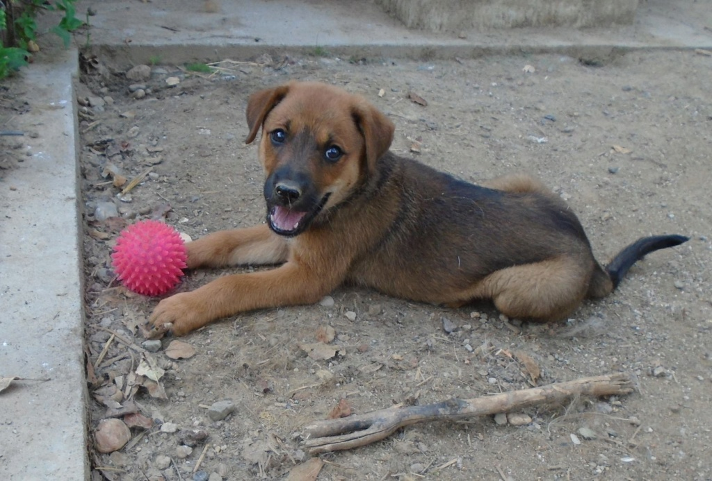 Zora - femelle - refuge de Arad - réservée adoption (67) Zora_510