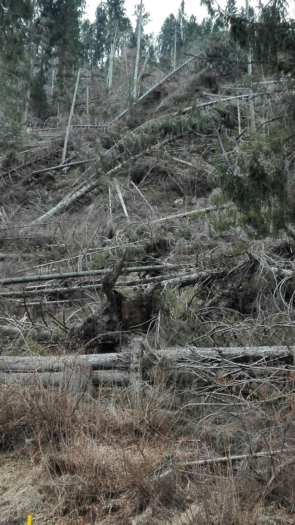 alberi abbattuti dai temporali - Pagina 2 Vaia_210