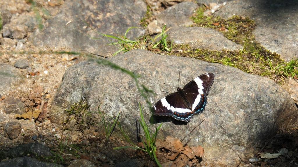 Papillons du Québec Img_6110